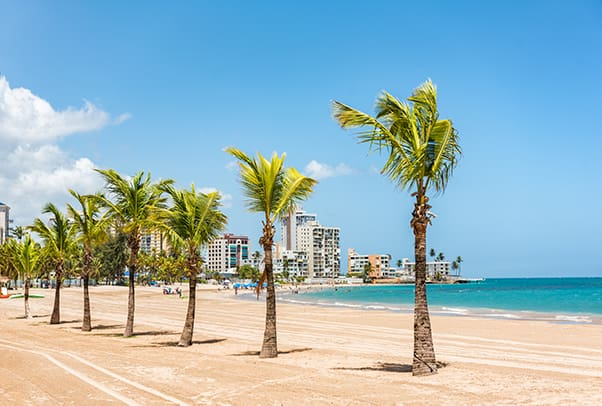 Palm Trees and Beach from Condado Puerto Rico